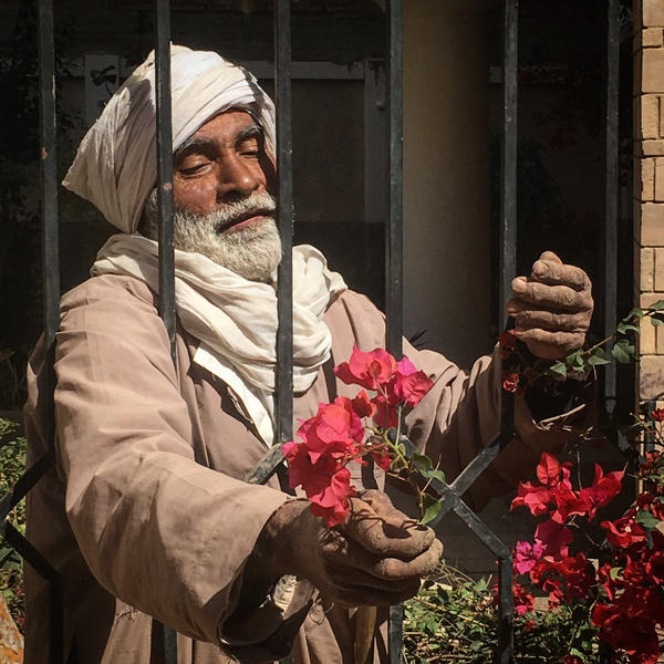 The gardener by Yousry-Aref