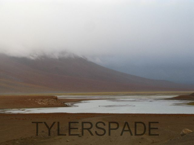 Desire by Tylerspade