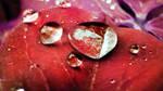 Crushed Red Velvet