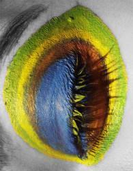 Peacock Eye II by viridis-somnio
