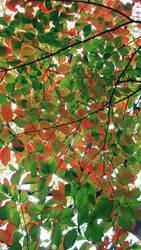 Color Splash by viridis-somnio