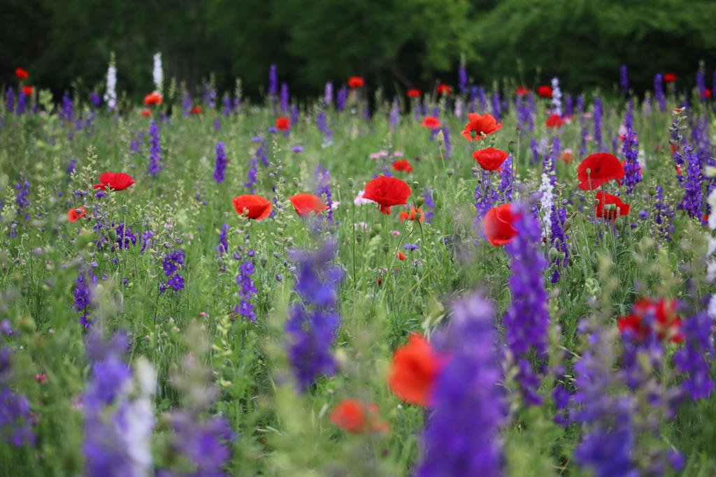 Wildflower Field by MoozieBerry