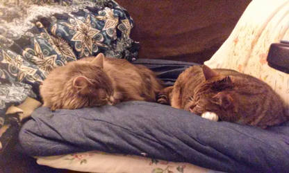 Syra and Sora snoozing on the sofa by AlisiaLanet