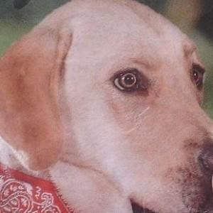 Corneliux's Profile Picture