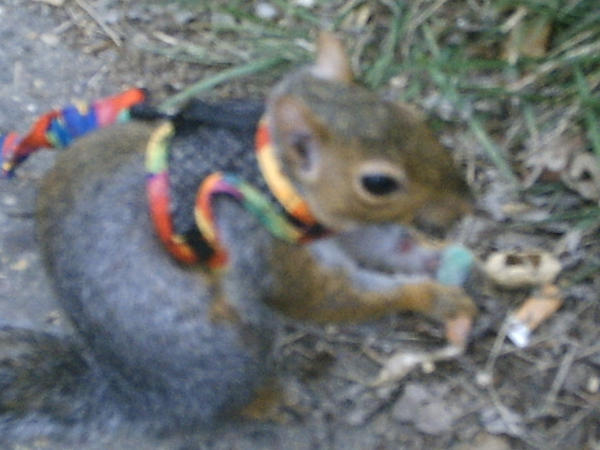 essay on my pet squirrel This pin was discovered by toru yunoki discover (and save) your own pins on pinterest.