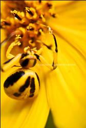 Spider 1 by mrsselfdestruct
