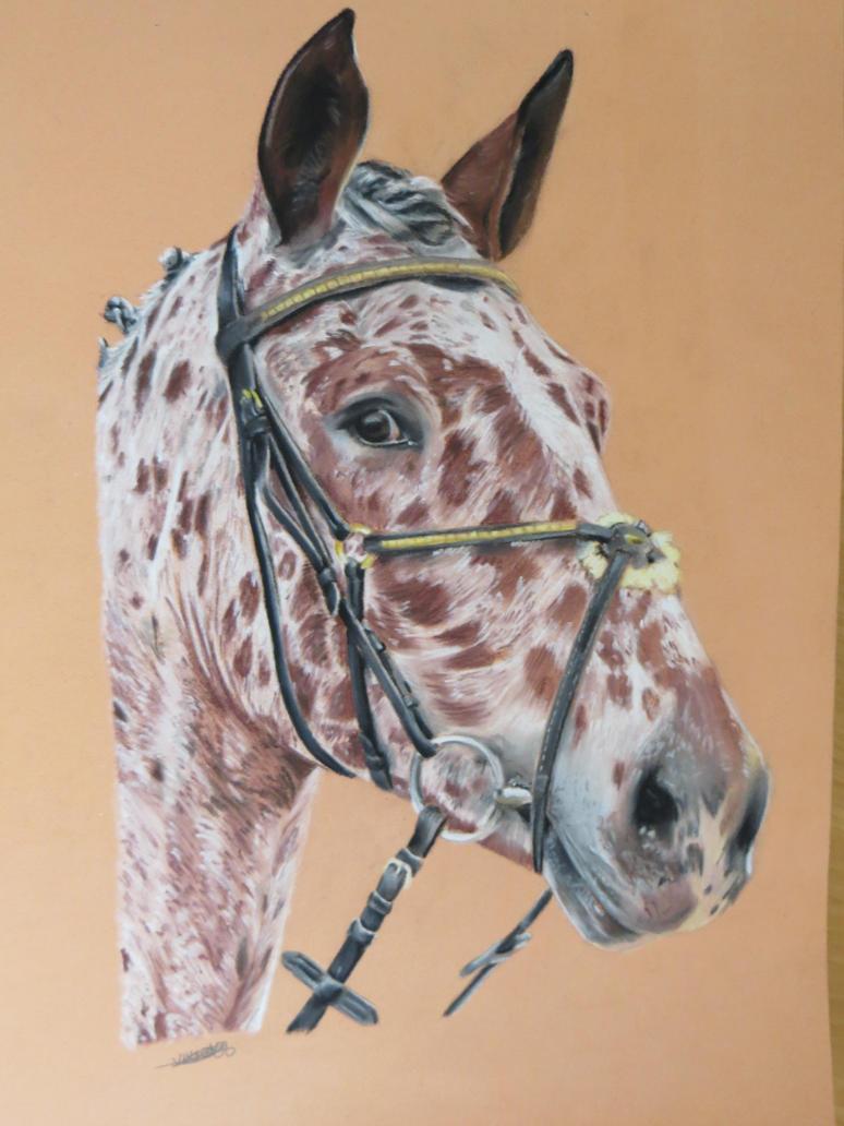 saphir : appaloosa horse by ameldrawings
