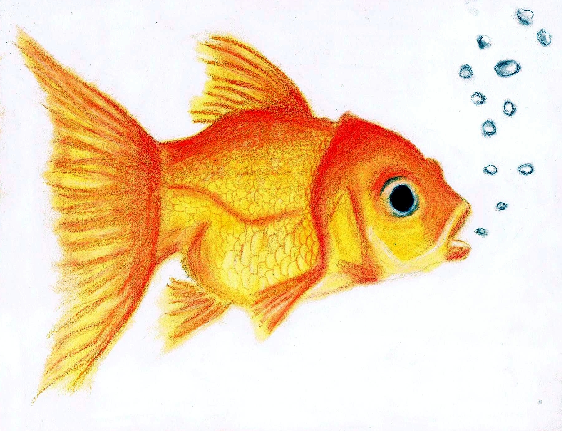 cute goldfish by oil bac
