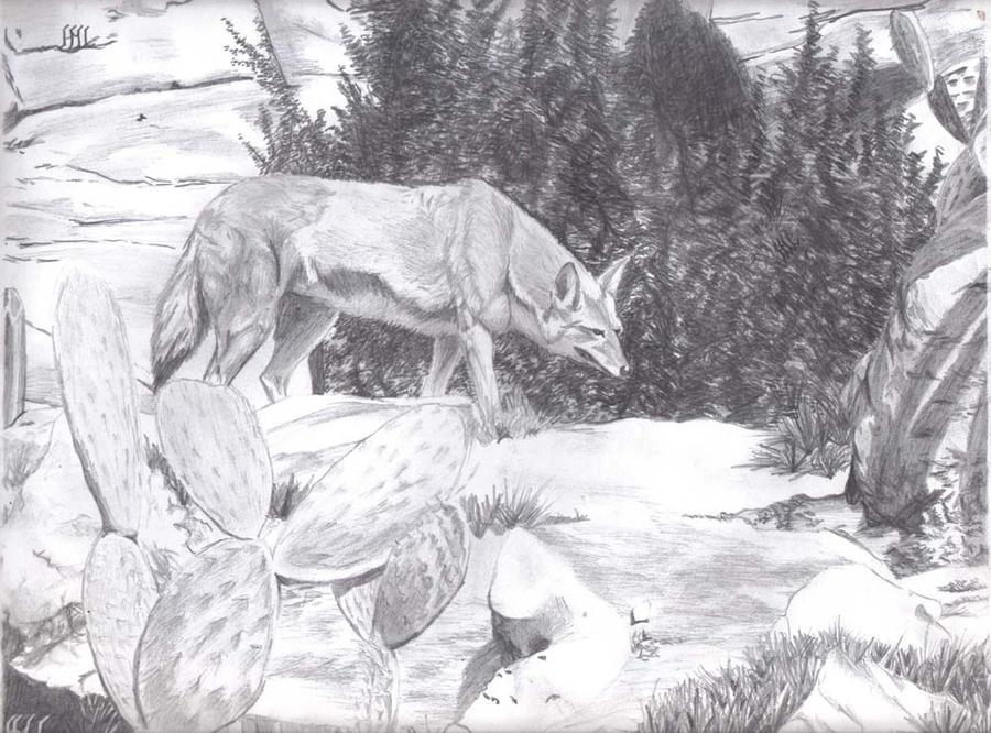 coyote hambriento by dalanator