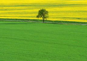 Spring by jarda13