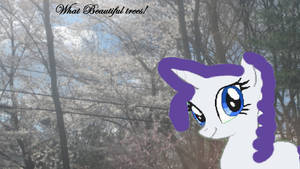Rarity and the blossom trees