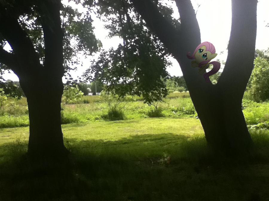 Little Fluttershy stuck in the tree by MetalGriffen69. Little Fluttershy stuck in the tree by MetalGriffen69 on DeviantArt