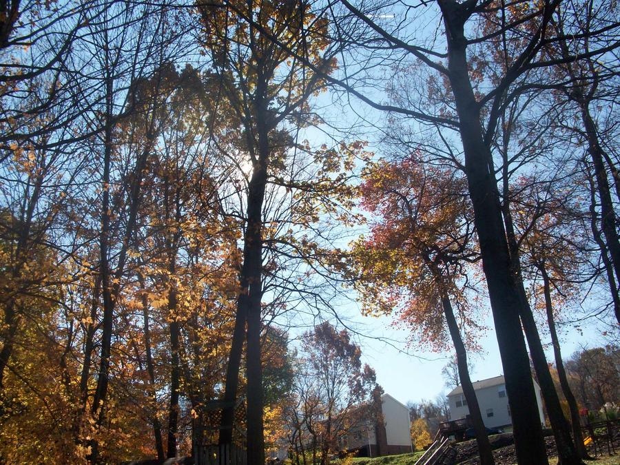 Fall 2011 by defyinggravity10