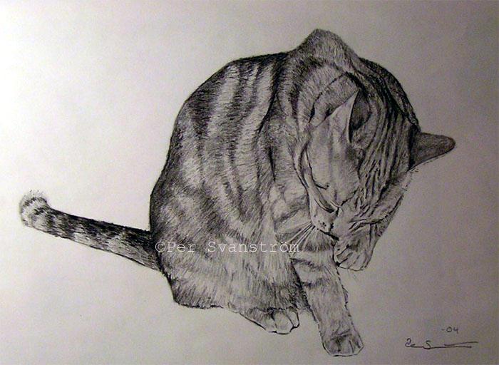The cat by Per-Svanstrom