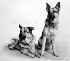 Zeb and Ricco by Per-Svanstrom