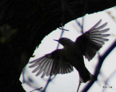 Wing Span by pril