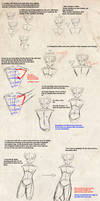 How to anatomy, tips