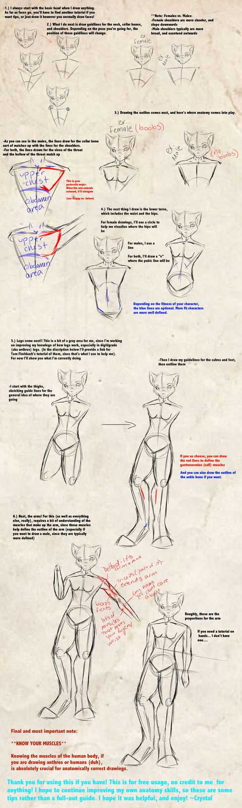How to anatomy, tips by CrystalRaven98