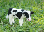 Needle Felted Baby Cow or Calf