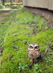 Hand Needle Felted Burrowing Owl soft sculpture