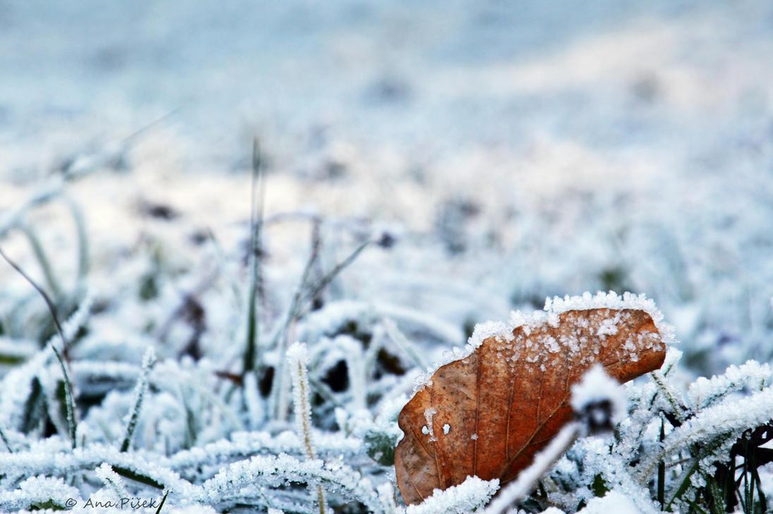 Frozen by AnaPisek