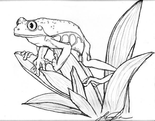 Line Drawing Frog : Tree frog on leaf by keldamage deviantart