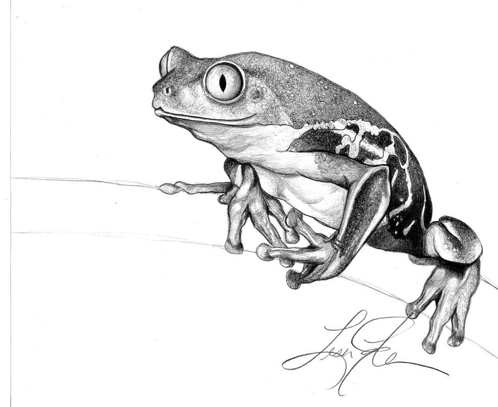 tree frog by keldamage on deviantart