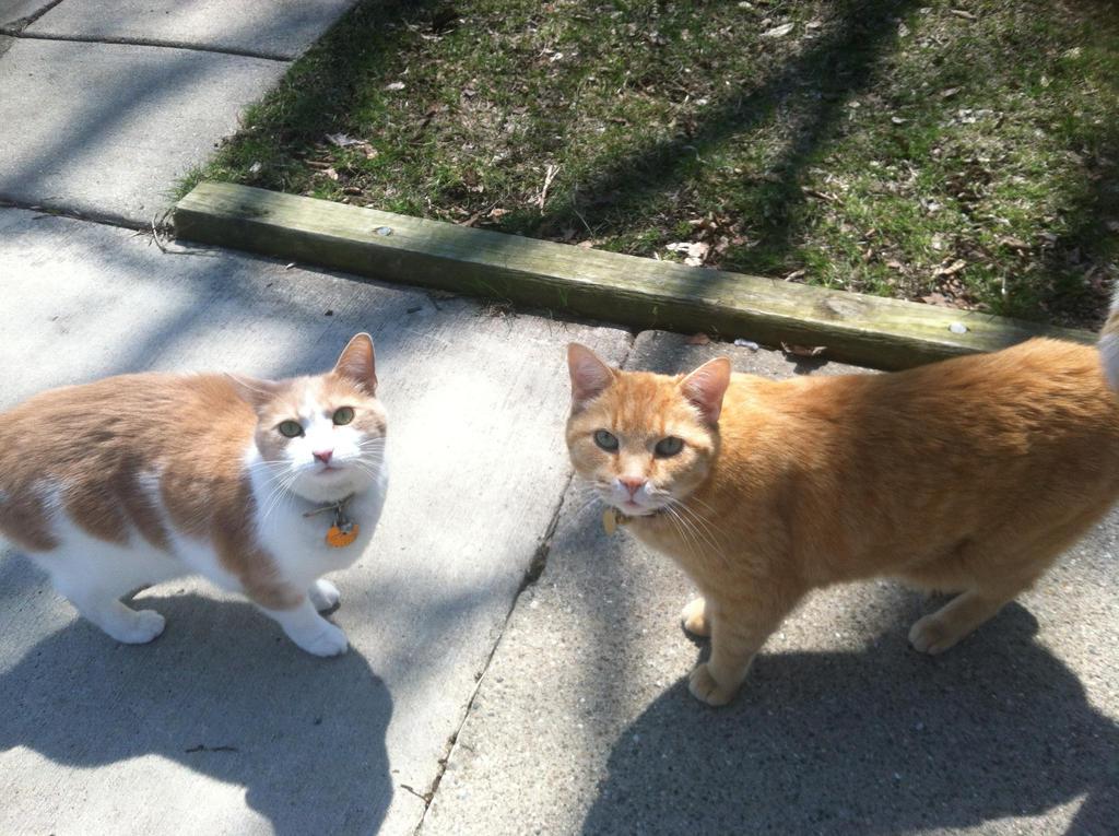 Two Adorable Kitties by Dreamangel686