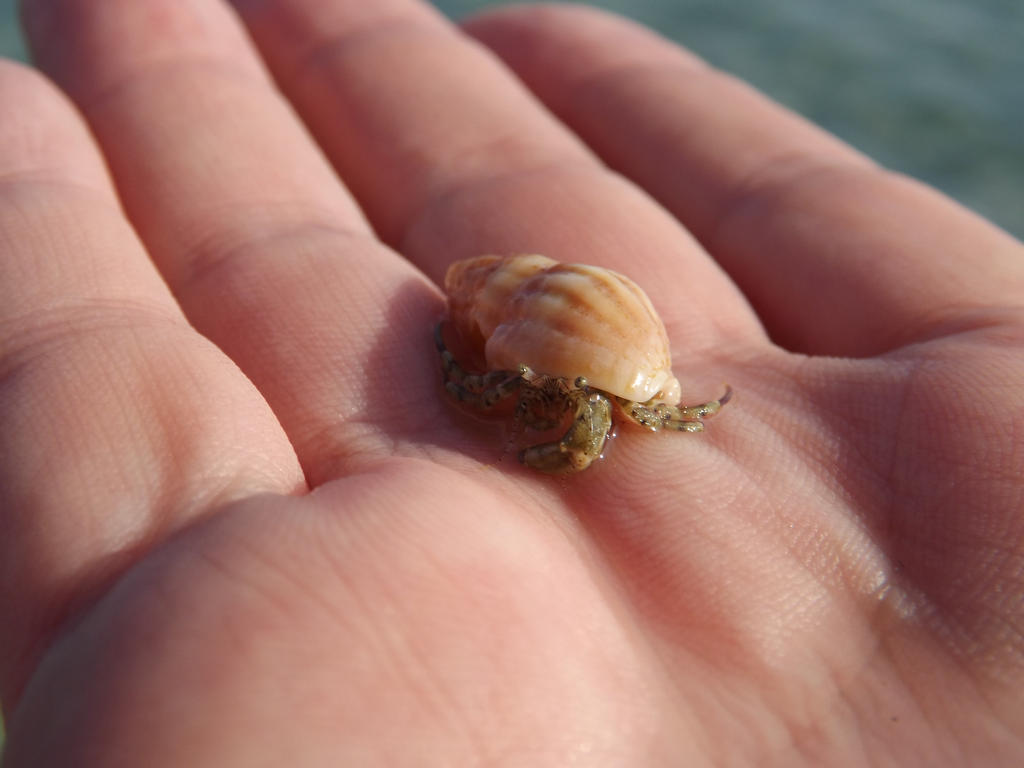 Tiny hermit crab by Aby-of-N-city
