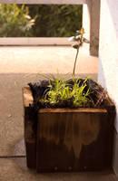 plant in sankeien by pommefritz