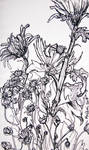 flowers 071205