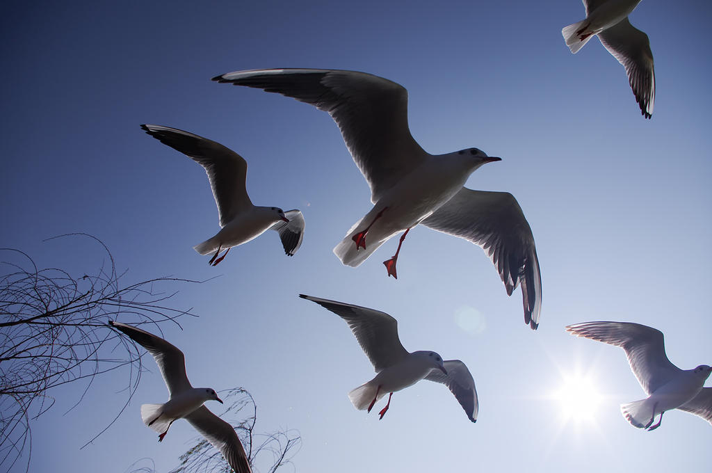 seagull by jonsonox