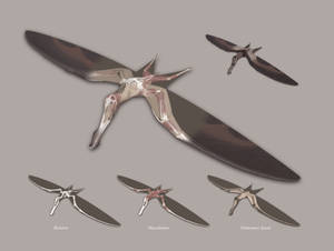 The Structure of a Pterosaur
