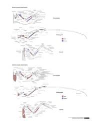 Comparitive Muscle Attachments