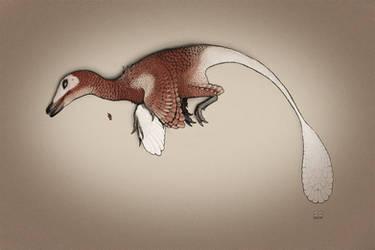 Dead Velociraptor mongoliensis