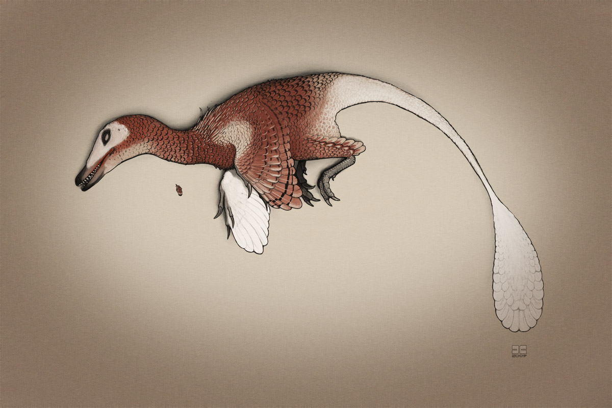 Dead Velociraptor mongoliensis by jconway