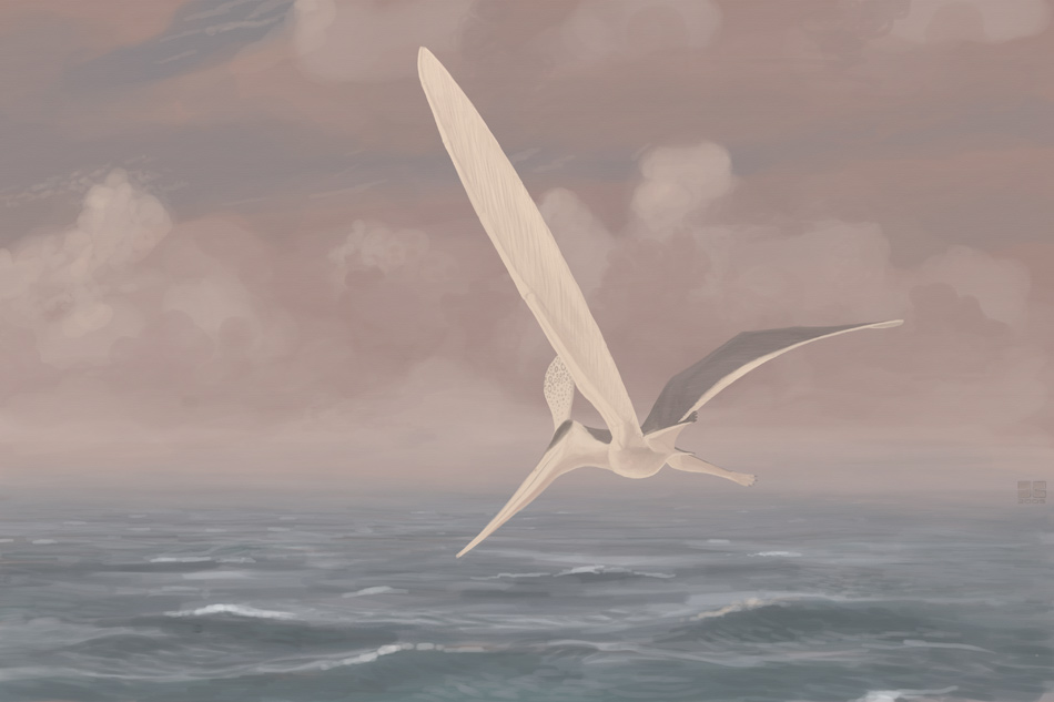 Pteranodon sternbergi by jconway
