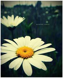 Daisy by Kiltul