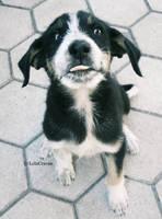 Happy little dog by LolaCraven