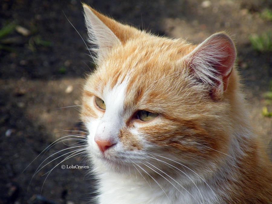 Serious cat face by LolaCraven on DeviantArt