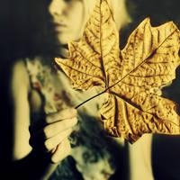 an autumn leaf by Keid-89