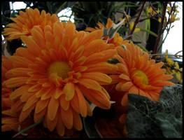 Orange Darkness by ogghunter