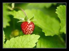 wild-strawberry by elysawus