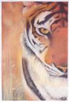 Tiger Attitude