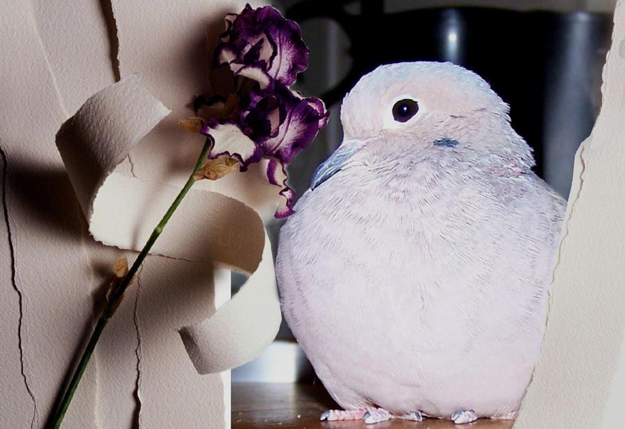 My Dove