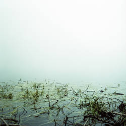 Fog - 01 by maxyme