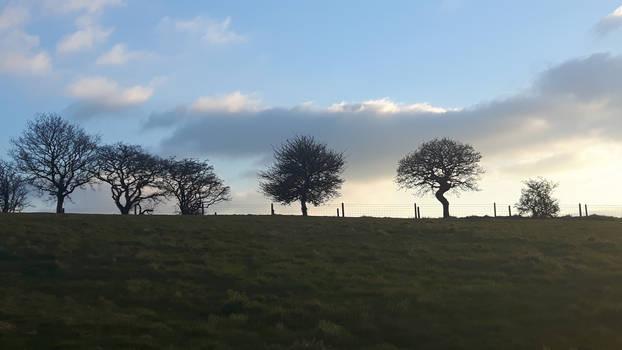 Wasley Hills