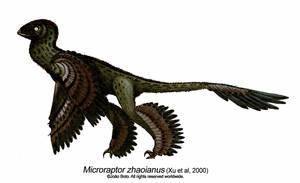 Microraptor zhaoianus by Sputatrix