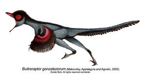 Buitreraptor gonzalezorum by Sputatrix