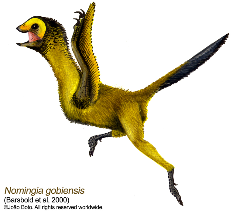 Nomingia gobiensis by Sputatrix